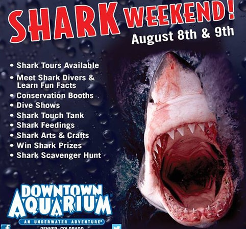 SHARK WEEKEND AT THE DOWNTOWN AQUARIUM