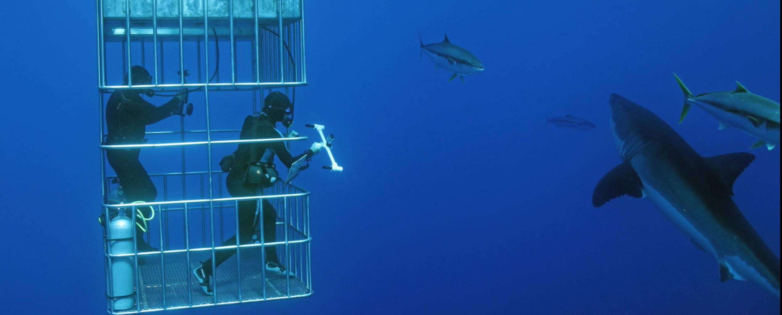 scientific research ocean first institute