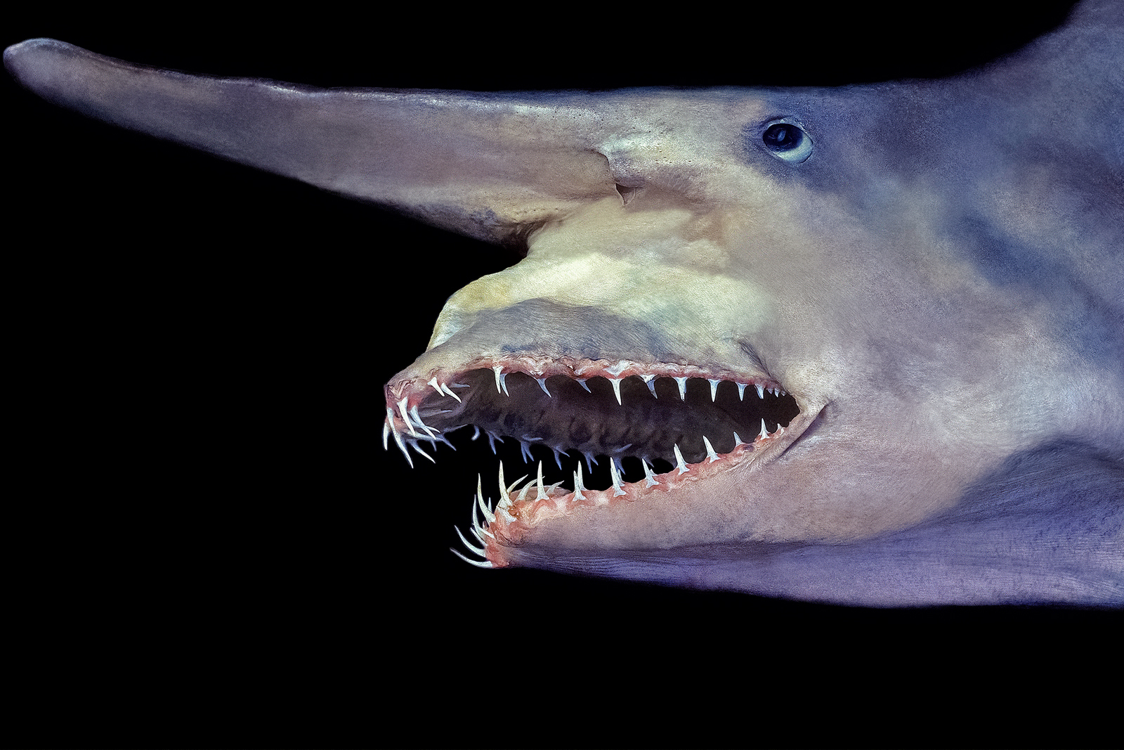 Sharks and Their Amazing Adaptations