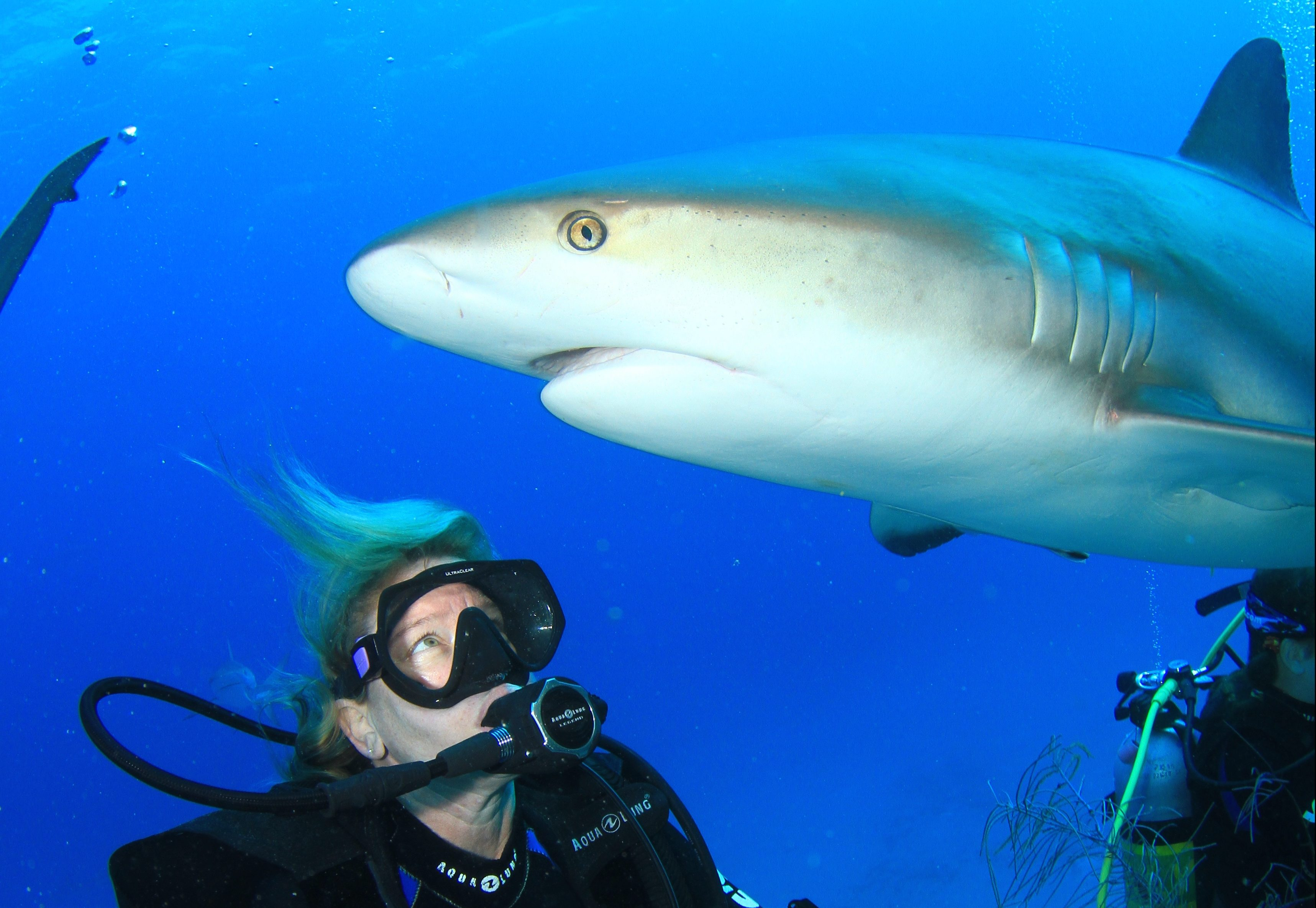 Sharks and Their Amazing Adaptations Webinar