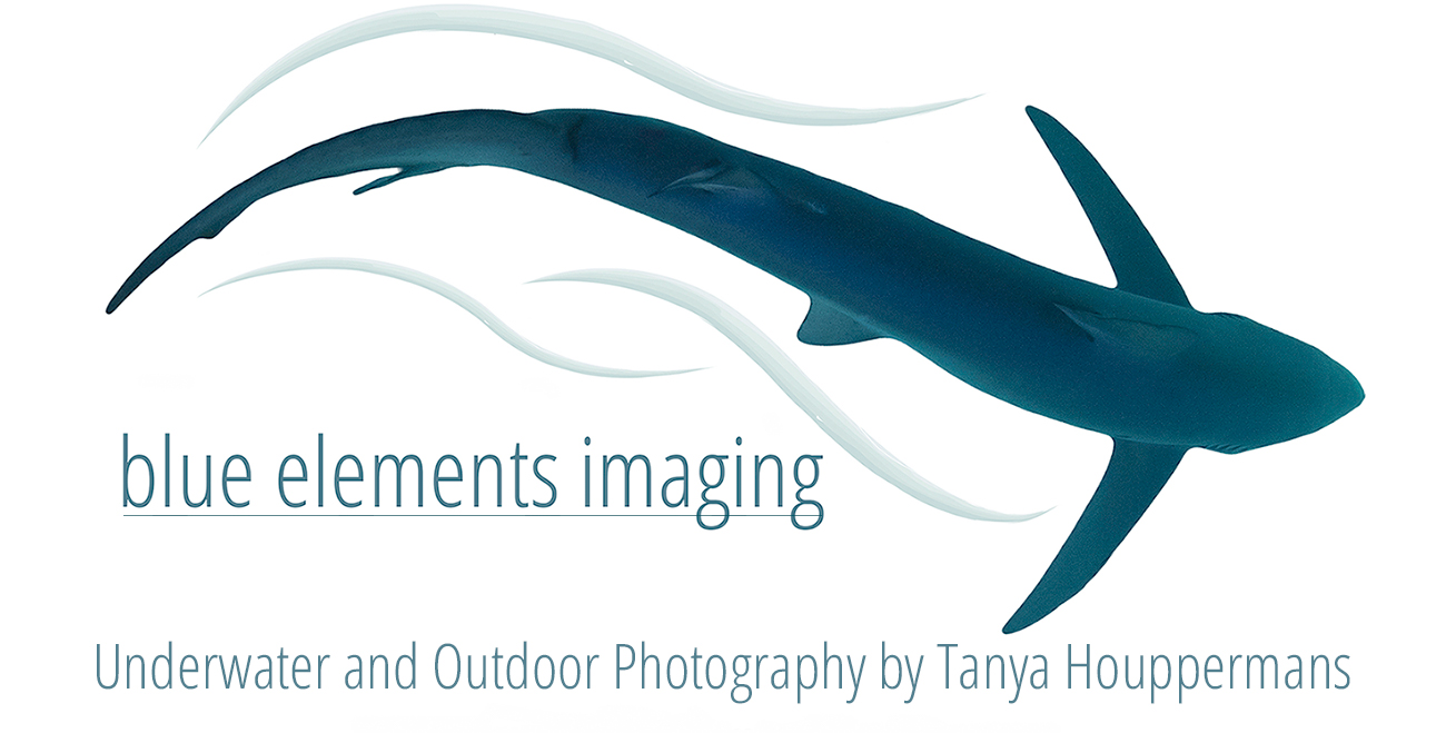 Blue Elements Imaging