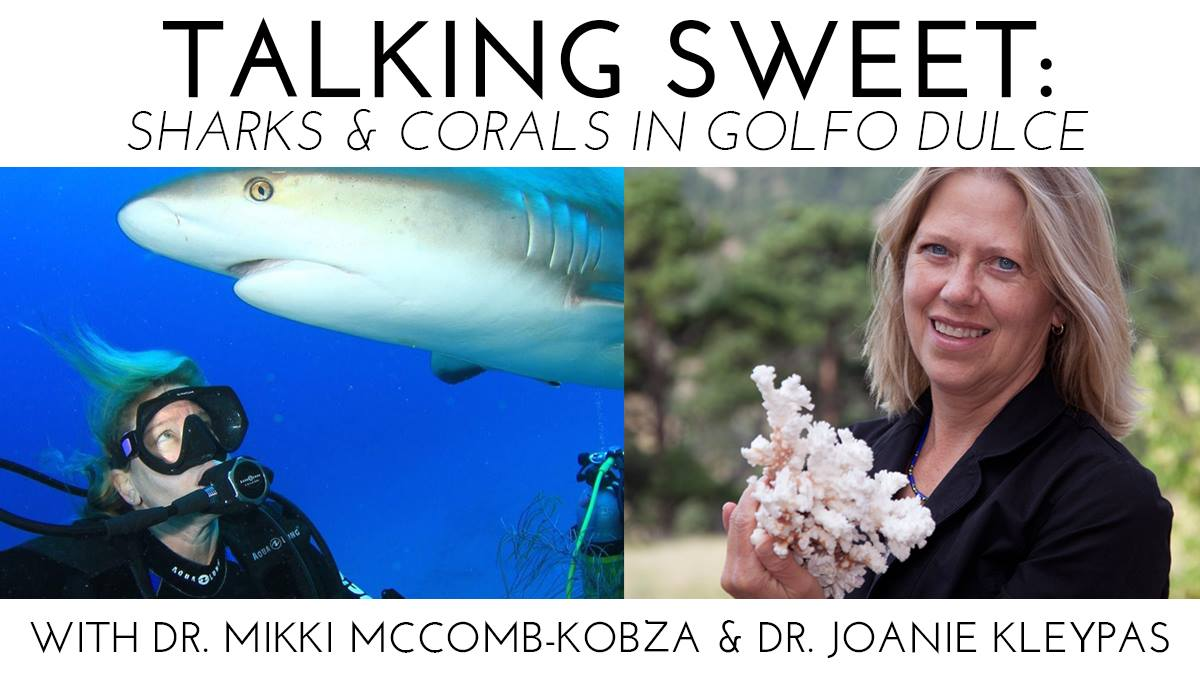 Ocean First Social – Talking Sweet: Sharks and Corals in Gulfo Dulce