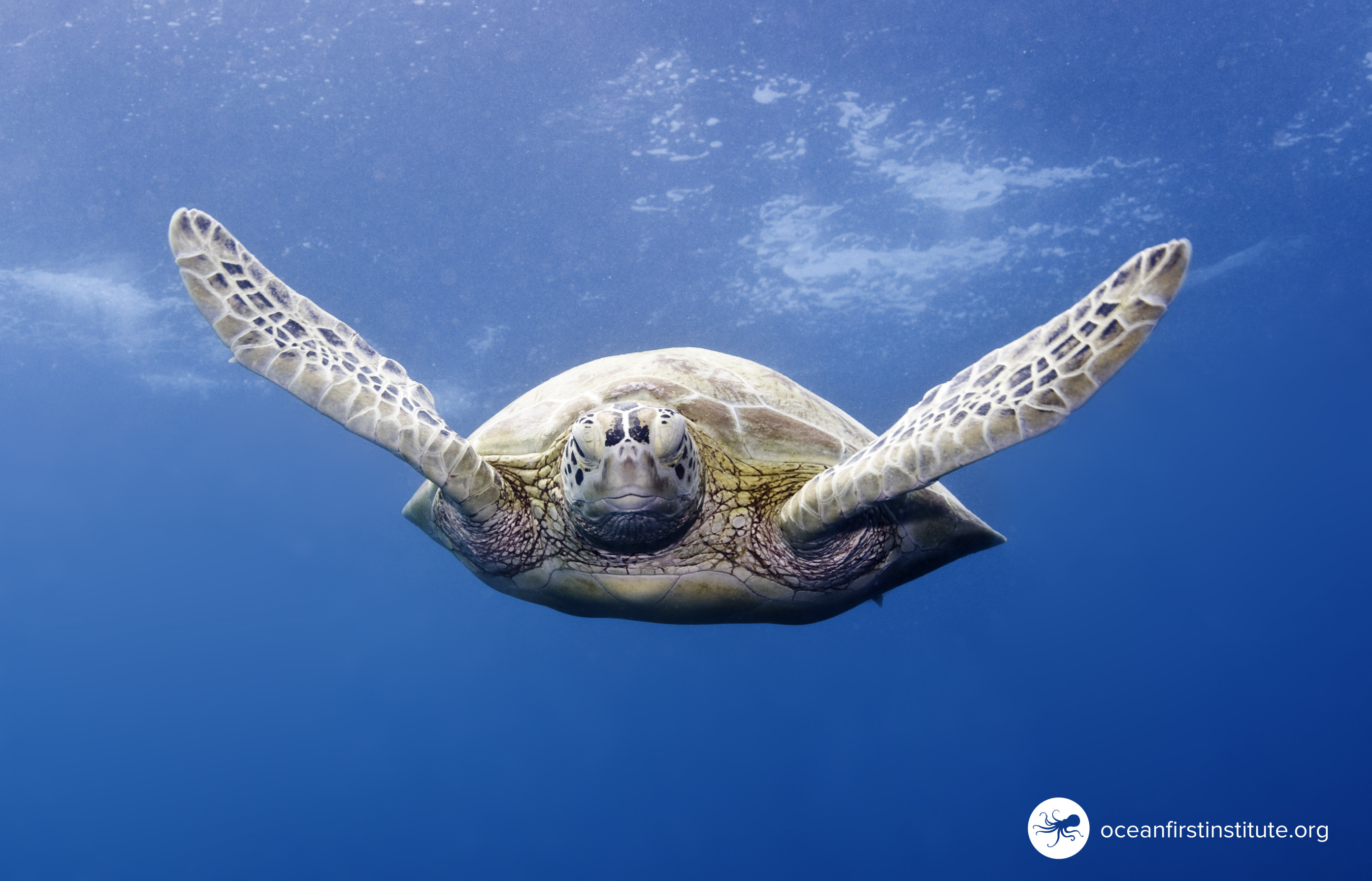 The Story of the Sea Turtle at Louisville Public Library