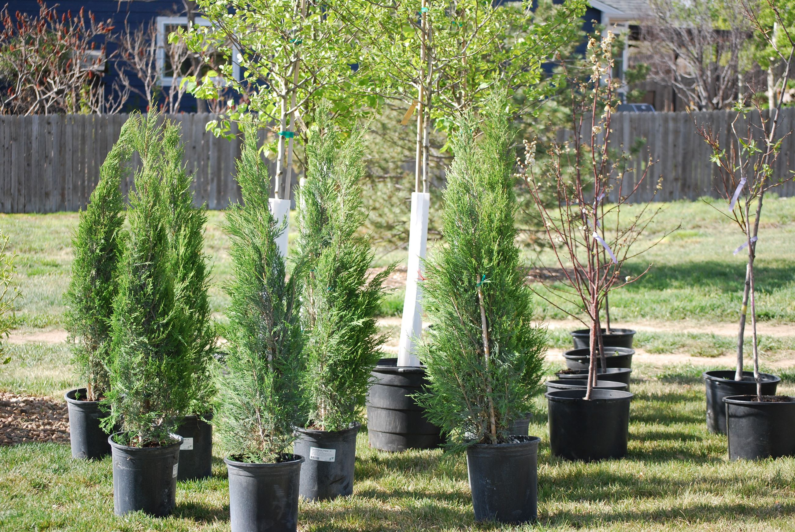 22nd Annual Erie Arbor Day & Earth Day Celebration
