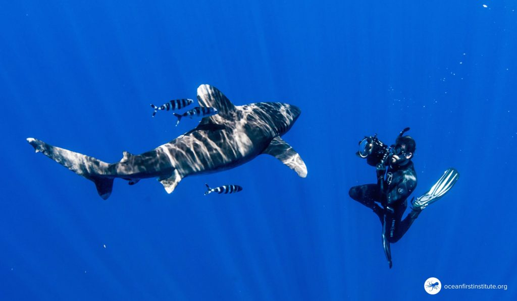 Creature Feature: Oceanic Whitetip Shark