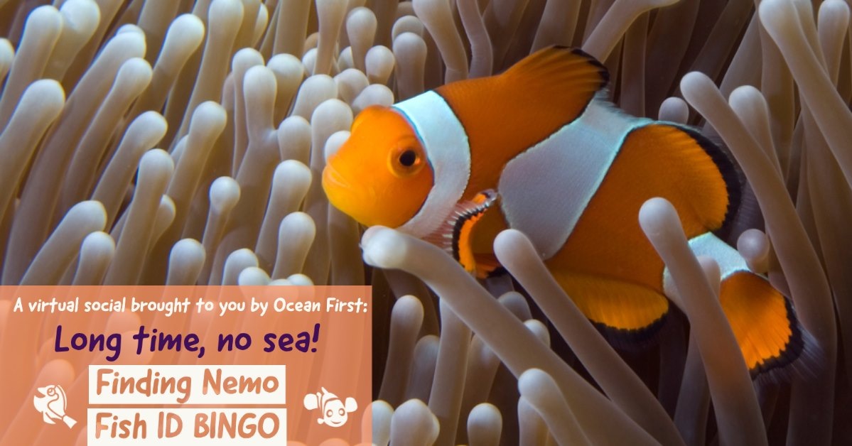 Long time, no sea! Finding Nemo Fish ID BINGO