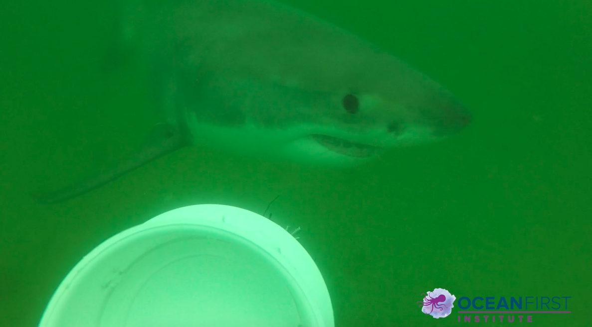 Earth Eco International Virtual Field Trip: What's the Catch: Shark Research and Conservation